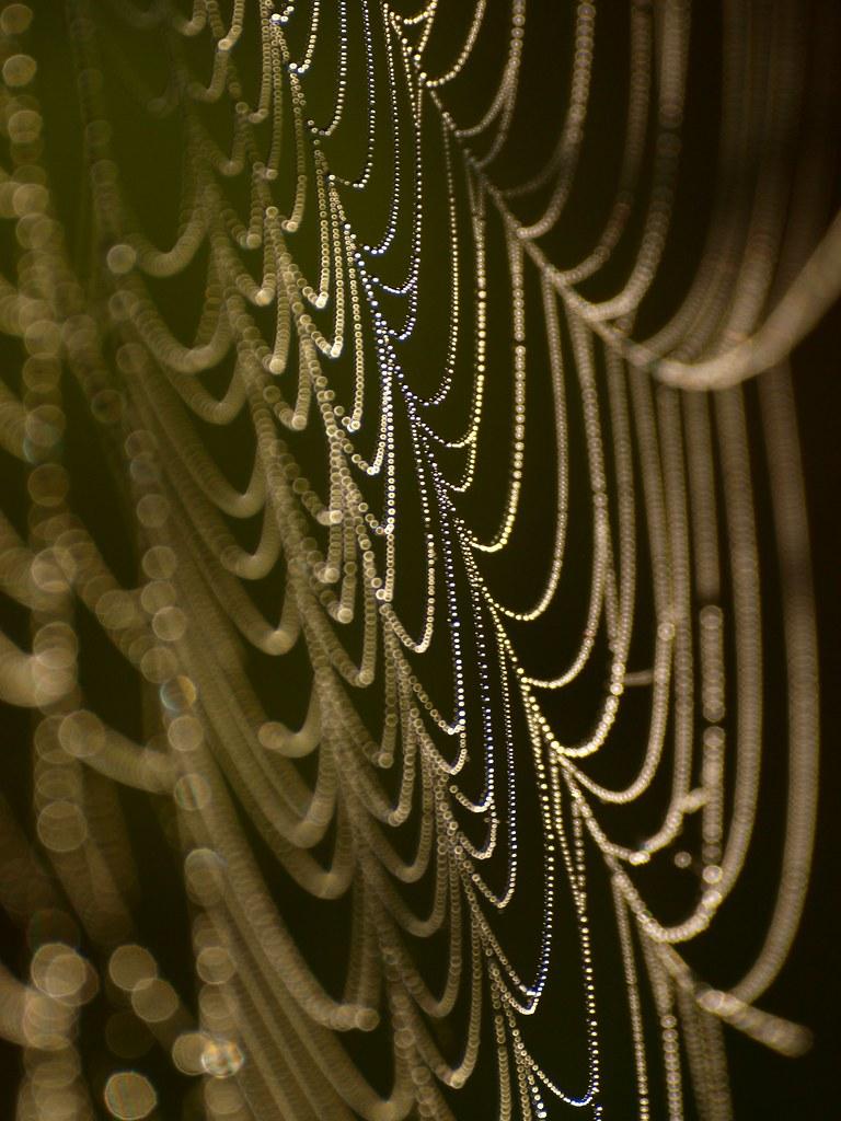 toile de ma tre l 39 oiseau a son nid l 39 araign e sa toile flickr. Black Bedroom Furniture Sets. Home Design Ideas