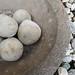 round beach rocks in stone basin