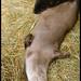 Sleeping Otters_Brandywine Zoo_Wilmington,Delaware