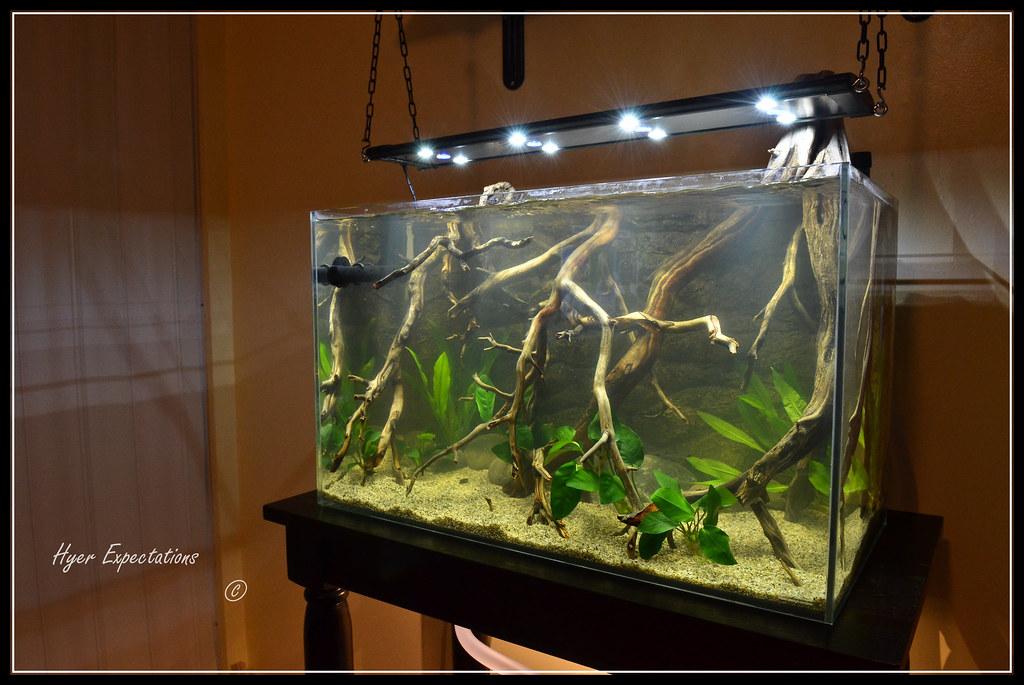 0811 New Amazon River Bank Biotope Aquarium Ejpnj Flickr