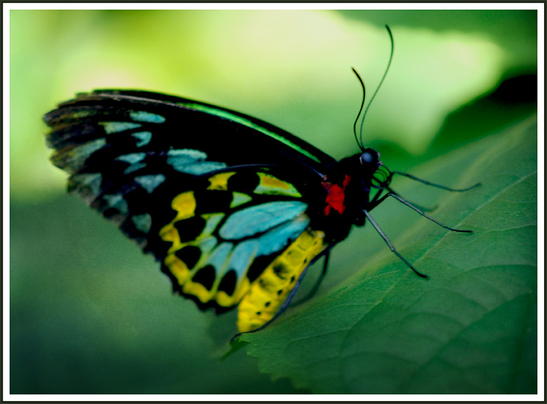 Colorful Butterfly | Day trip to the Butterfly Pavillion tod… | Flickr