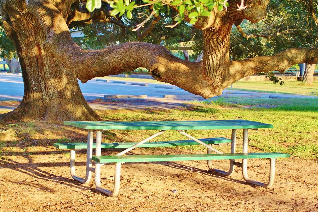 Picnic Table Under A HUGE TREE Runge Park In Santa Fe Tex Flickr - Huge picnic table