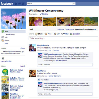 Wildflower Conservancy on Facebook! | by Kahlee Spiritdancing