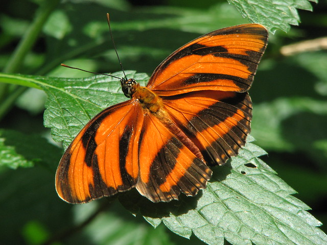 niagara falls butterfly conservatory flickr photo sharing. Black Bedroom Furniture Sets. Home Design Ideas