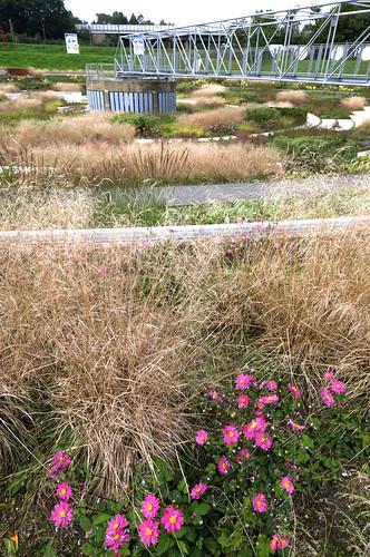 Berne park theater der pflanzen von for Piet oudolf pflanzen
