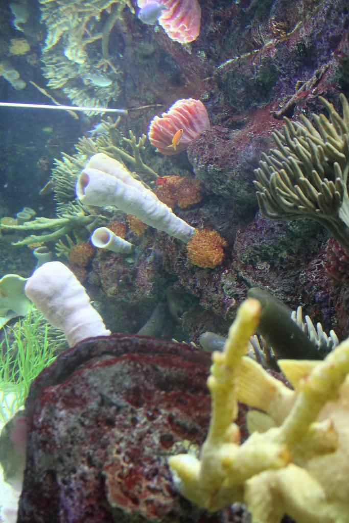 Aquarium Designer