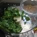 cilantro & garlic