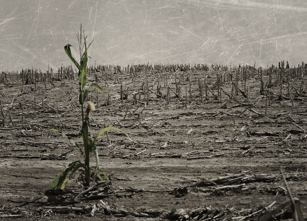 Green Shoot in a Barren Wasteland | Across the road from a ...