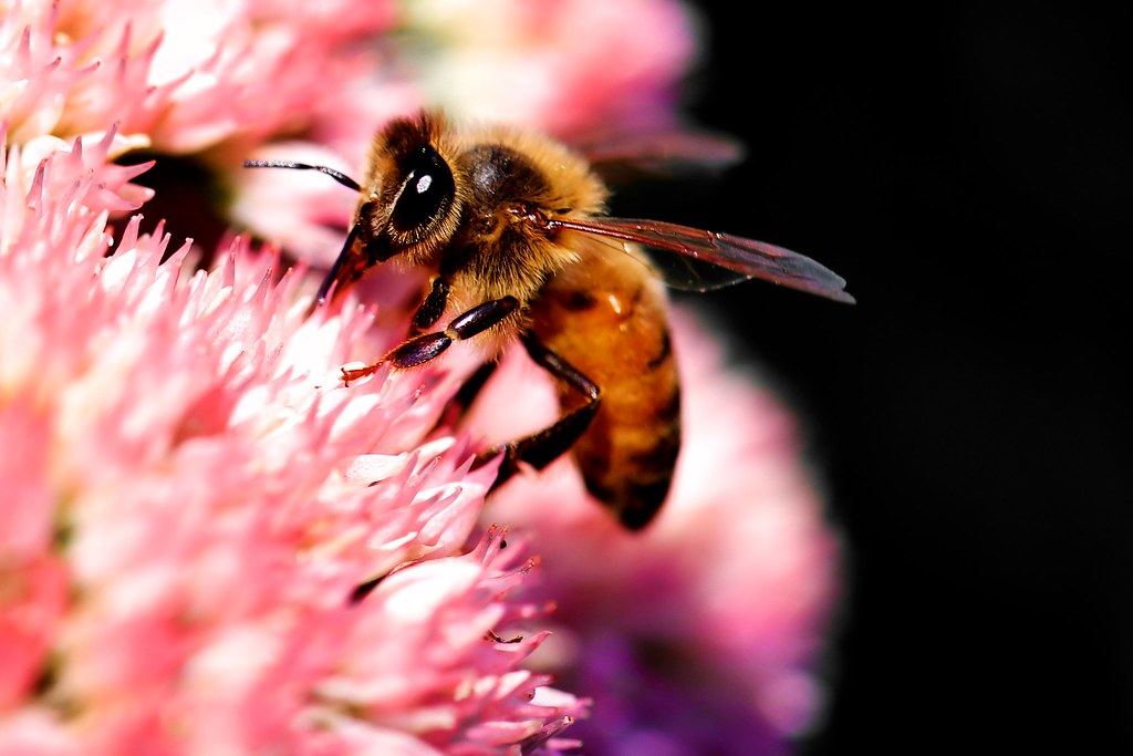 bee mosca danny perez photography flickr