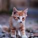 Feral Cat #6