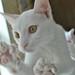 White Kitten 1