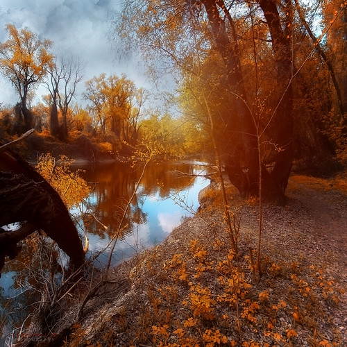 autumn trees by the river - EXPLORED 19/09/11 | by ildikoneer