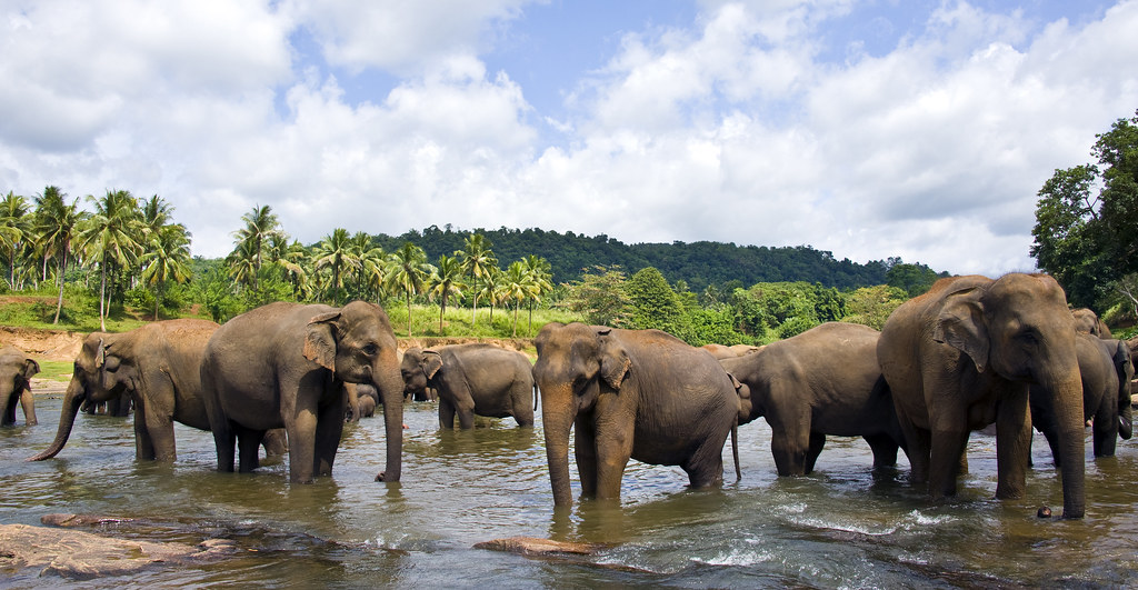 cultural guidelines of sri lanka Answer 11 of 13: i am travelling around sri lanka in janaury [2 passengers] travelling colombo, dambulla, kandy, ella,mirissa, and back to colombo please can you recommend a car and driver hire company please thanks.