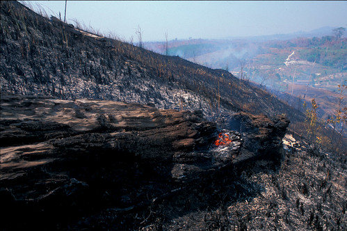 Burning forestland | by Environmental Investigation Agency (EIA)