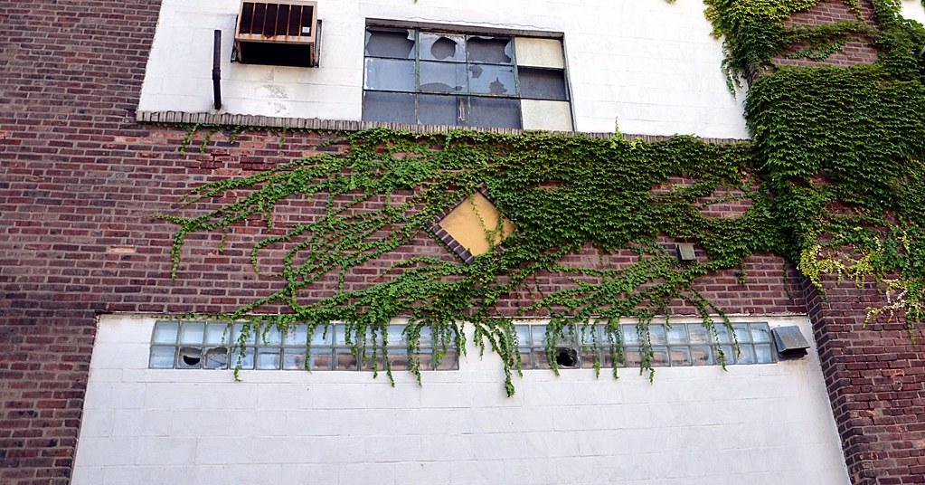 Windows Ivy Abandoned Factory In Trenton Nj Originally Flickr