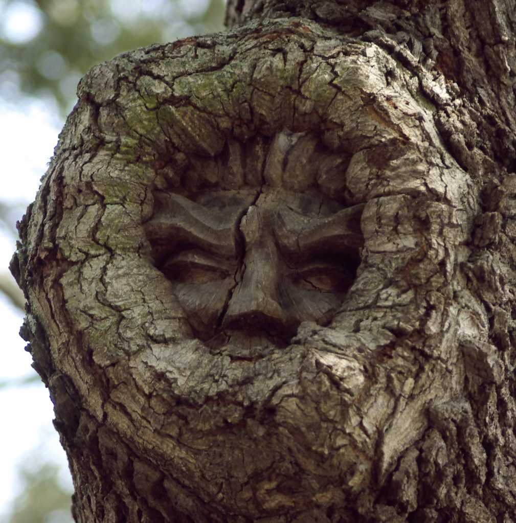 Tree Faces St Simons Island Map