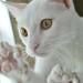 White Kitten 2