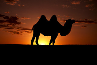 The Great Camel | by Jeremy & Chanel's Photography