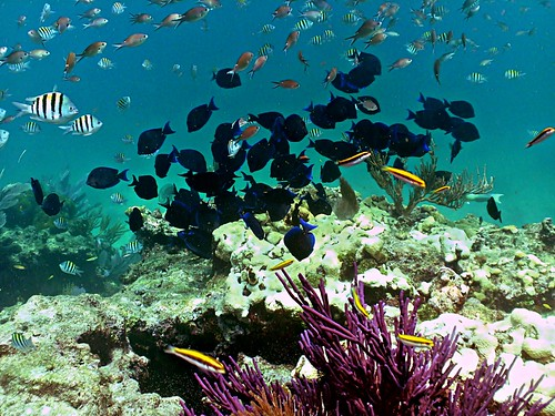 Looe Key Coral Reef National Marine Sanctuary | by Phil's 1stPix