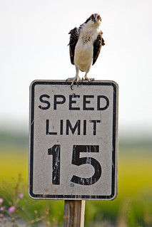 Speed Enforced by Osprey | by Brian E Kushner