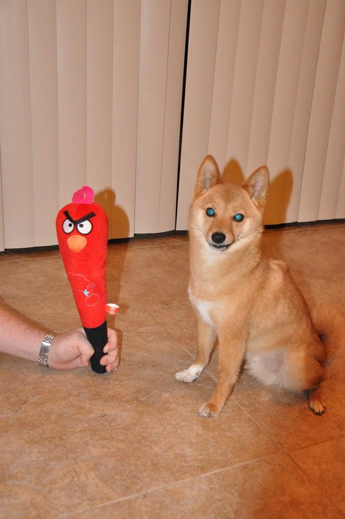 How To Win >> angry bird vs. zombie shiba taro (who will win?)   more of t…   Flickr