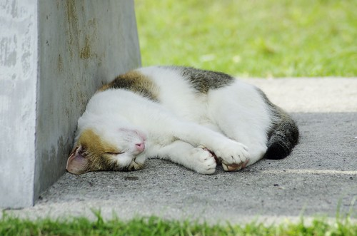 Cat in Changi village | by INABA Tomoaki
