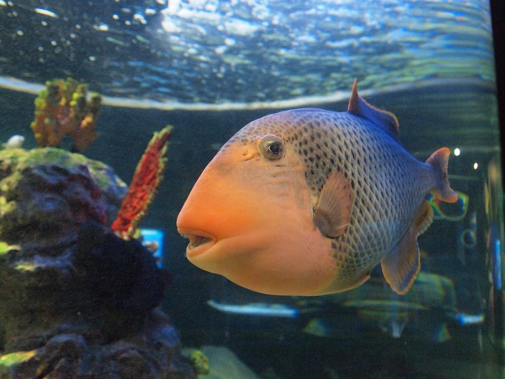 Freshwater fish korea -  Fish Busan Aquarium Busan South Korea By Mikemellinger