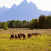 Horses grazing near Grand Teton mountains