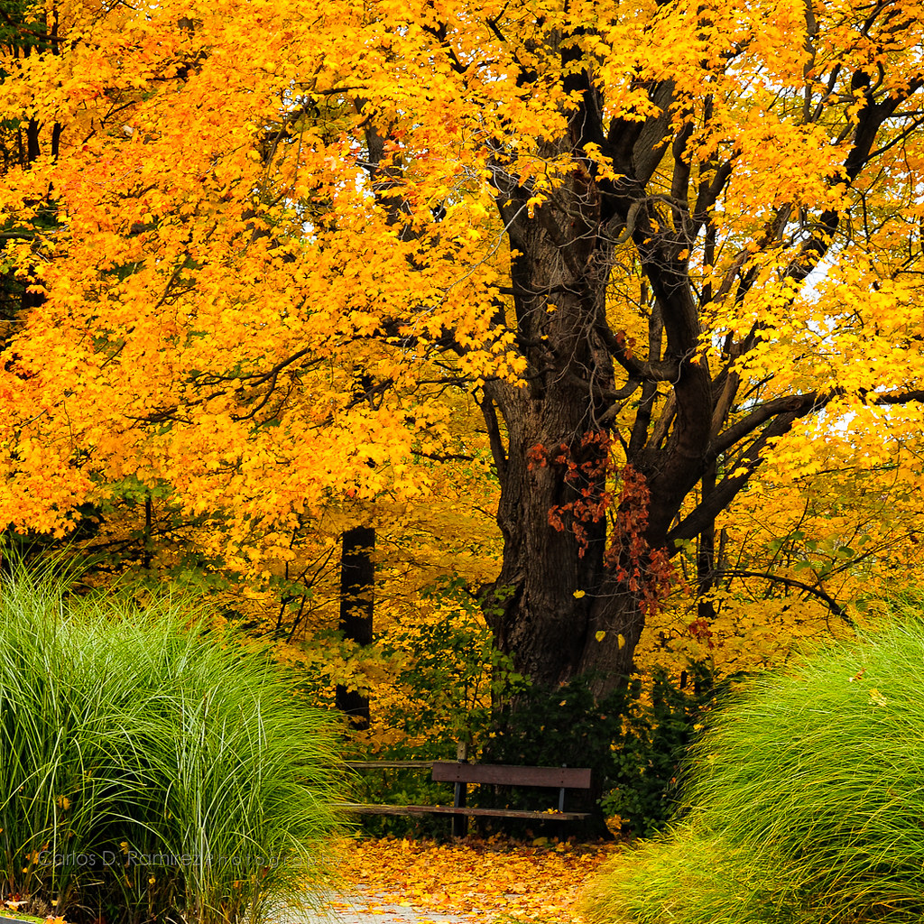 Autumn | Edwards Gardens North York, Ontario | Carlos D. Ramirez ...