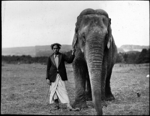 Elephant and man in field | by Tyne & Wear Archives & Museums