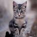 Feral Cat #4