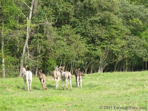 Kicking up their hooves in Donkeyland | by Farmgirl Susan