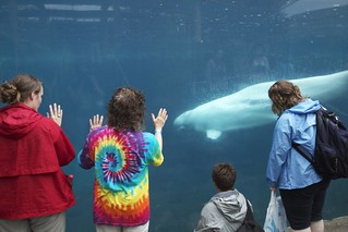Natalie, Brandy, Gail, and Dia, watching Belugas | by North Carolina Museum of Natural Sciences