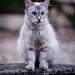 Feral Cat #7