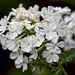 Flower Jewels