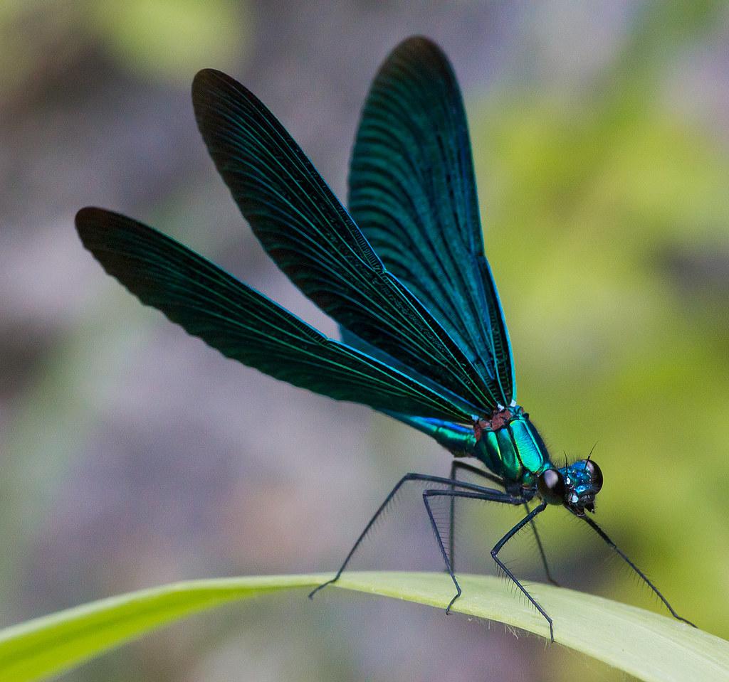Фото стрекозы