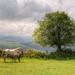 Campo de San Roque, Tineo (Asturias, Spain), HDR
