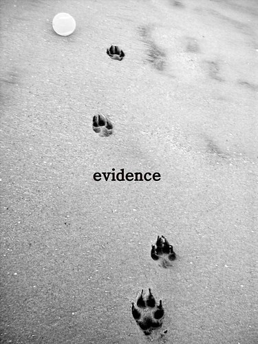 evidence | by RichCasillas SnapShots
