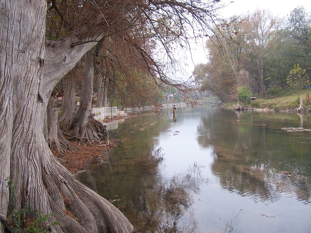 Fly fishing in the guadalupe guadalupe river new for Guadalupe river trout fishing