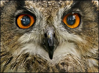 Eyes of the Eagle Owl | by adrians_art