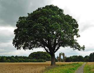 Guisbrough Priory under the Tree -  Aug2011_271 | by philb1959