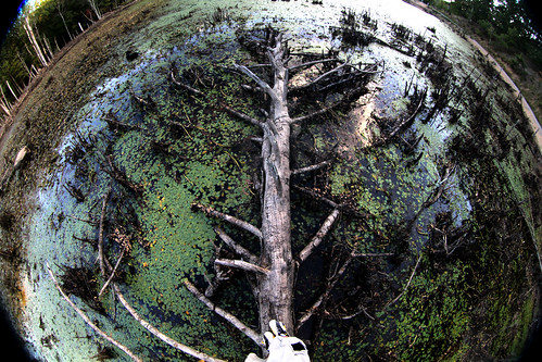 Fisheye Swamp | by CJY - Flash