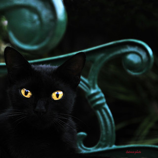 Cat's Style( Black cat on green) | by Mario Curci