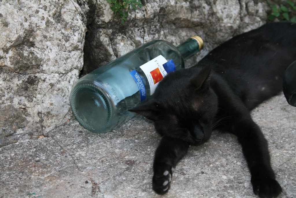 Drunk Cat lying down in Lucchio Hill Top village | Drunk ...