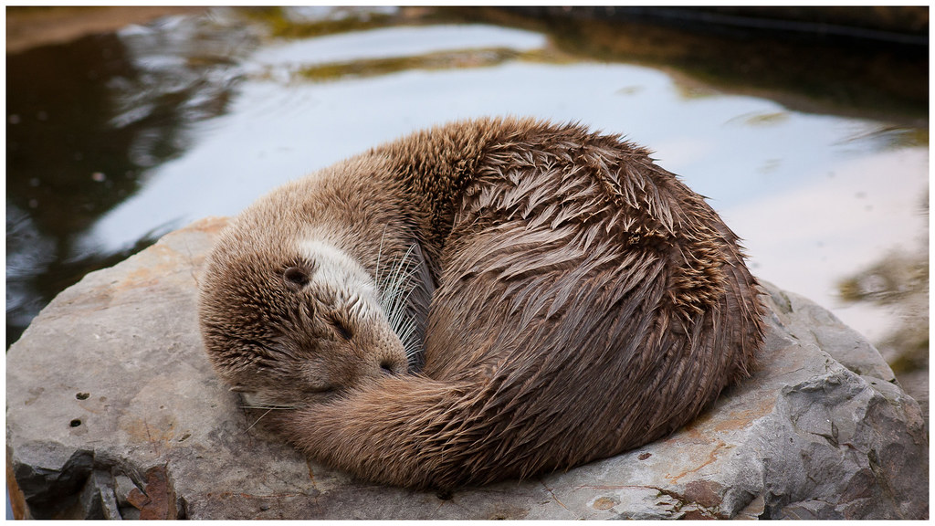 Image result for sleeping animals