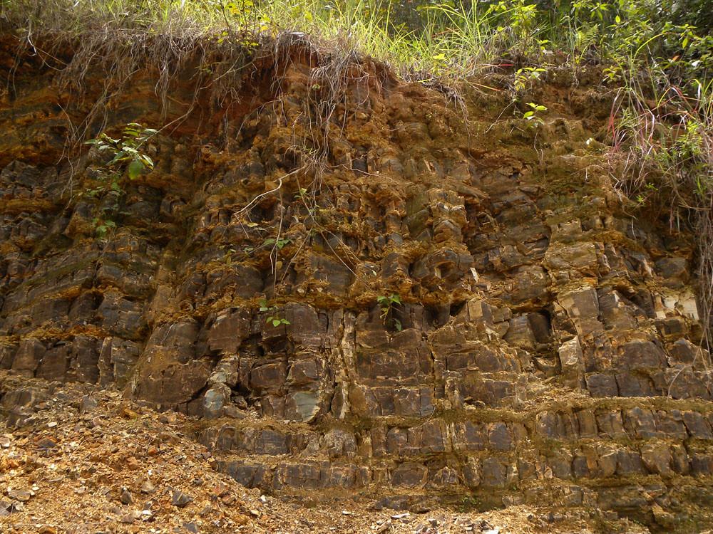Perfil del suelo cerca al rio sierpe vascular plants of for Perfil del suelo wikipedia