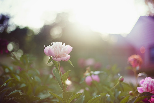friday flower flare! | by tumbleweed.in.eden