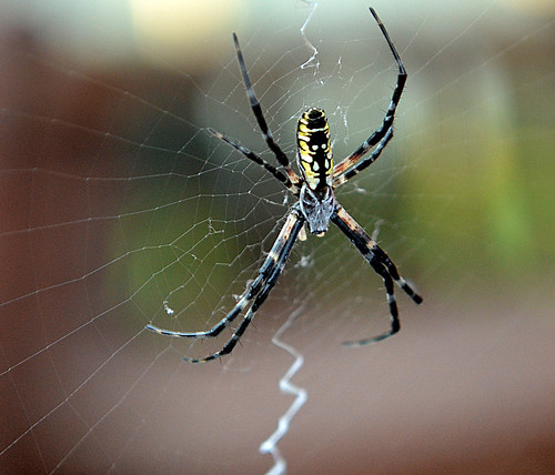 Time to face  my phobia  - Arachnophobia | by Just Joe ( I'm back...sort of )