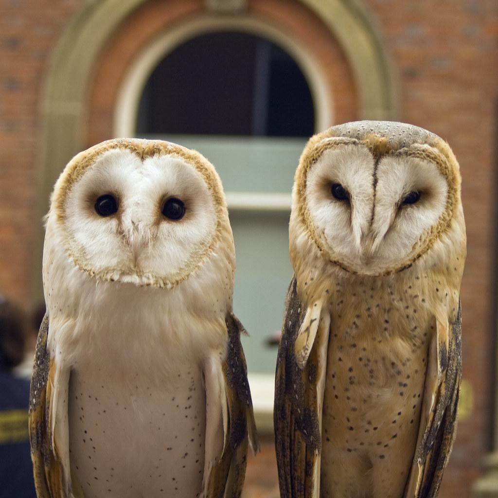 Sex In Owl