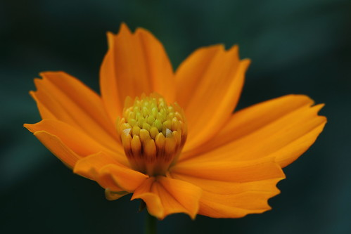 Flowers  - 6 | by tanmay.shah